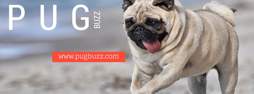 pugbuzz-facebook-cover3